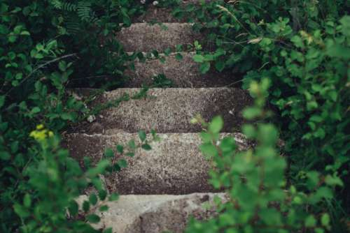nature plants vines paths stairs