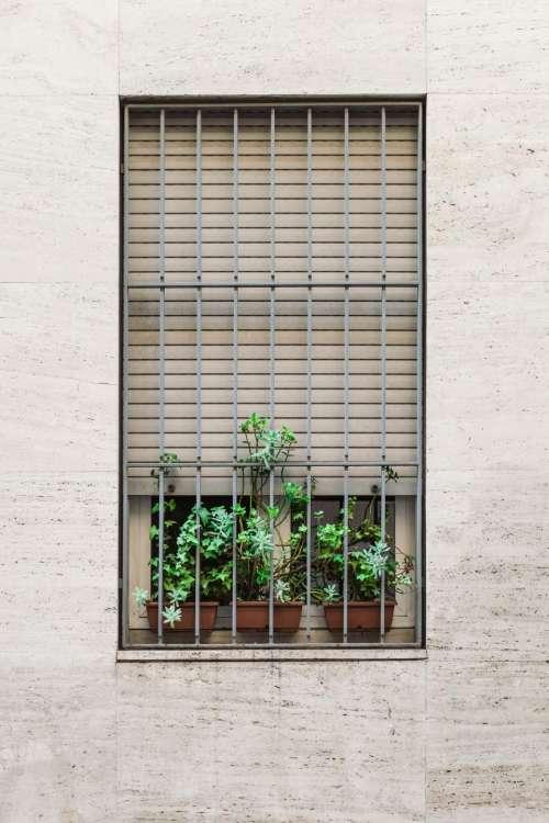 symmetry aesthetics windows grills plants