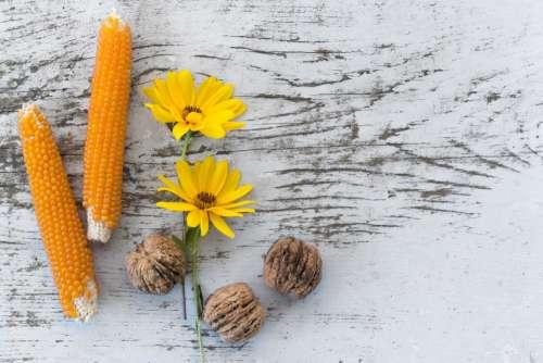 rustic corn flowers walnuts food