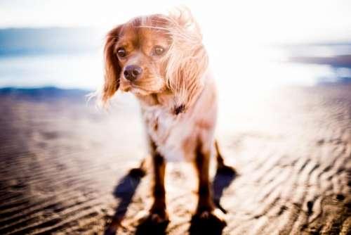 dog animal pet puppy beach