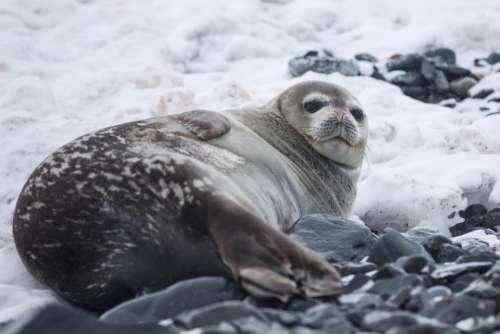 sea lion aquatic animal mammal