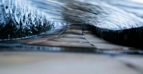 tree plant street road blur