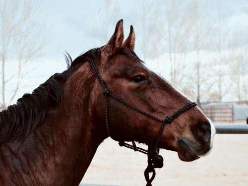 horse animal brown snow winter