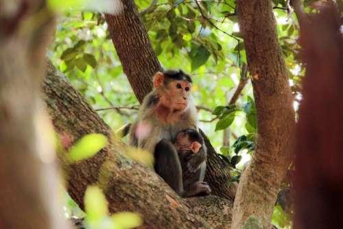 monkey animal pet wildlife tree