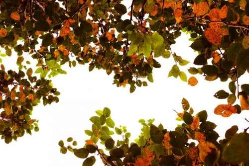 tree leaf autumn plant sky