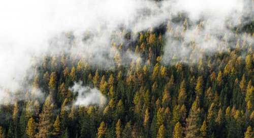nature landscape forest trees clouds
