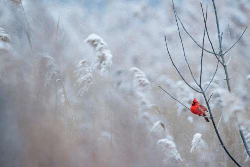 red bird branch grass outdoor