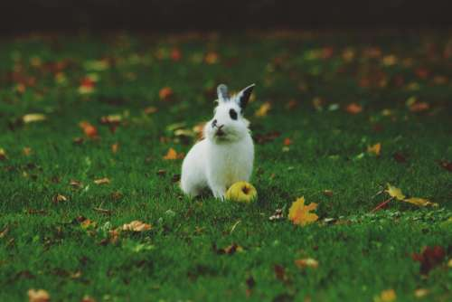 green grass playground rabbit animal