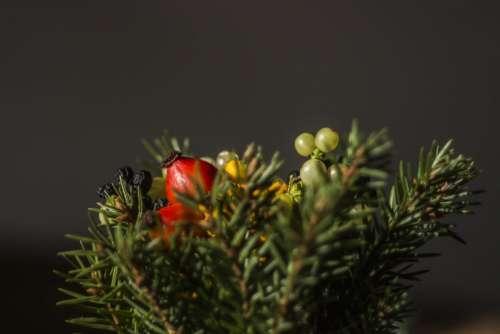 tree plant red fruit display