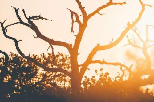 tree wood plant sky sunset