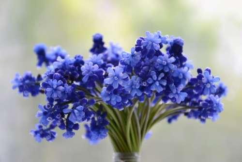 flowers bouquet bloom blue muscari