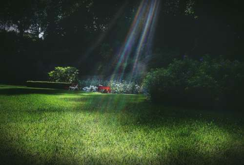 garden park grass sunlight lawn