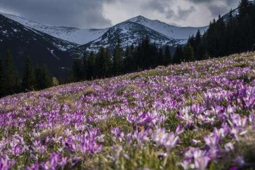 flower violet petal bloom garden