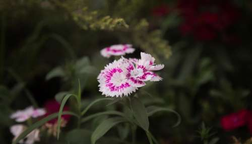flower bloom petal nature plant