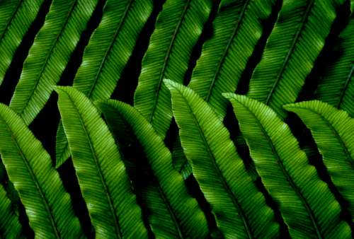 green leaves pattern background nature