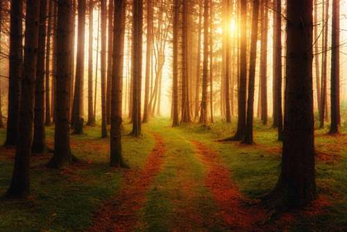 trees sunset green nature wood