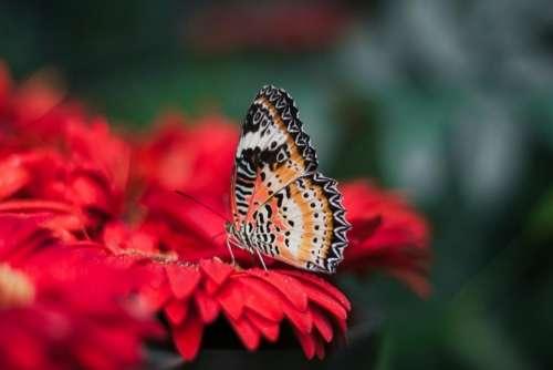 red petal flower bloom nectar