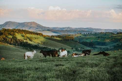 goats beautiful hillside scenic landscape