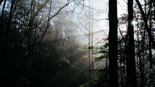 morning sunshine sunrise trees plant