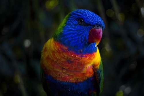 nature animals parrot rainbow colors