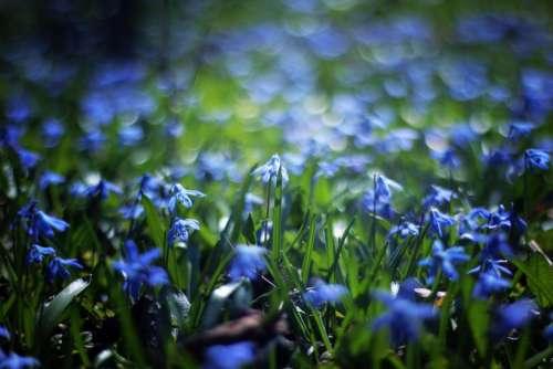 blue petal flower bokeh plant