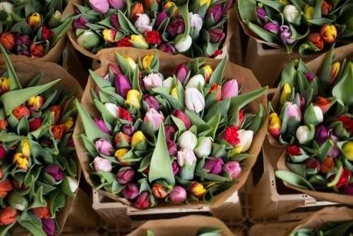 tulips flowers bouquet basket beauty