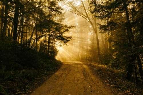dirt road rural sun rays sunlight