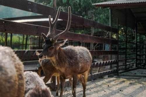 animals mammals reindeers pen zoo