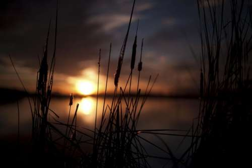 nature sunset grass green clouds