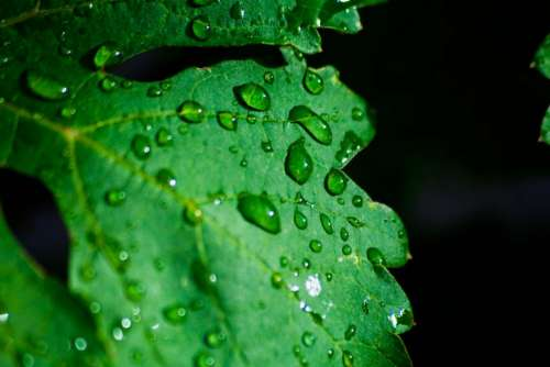 green leaf plant wet water