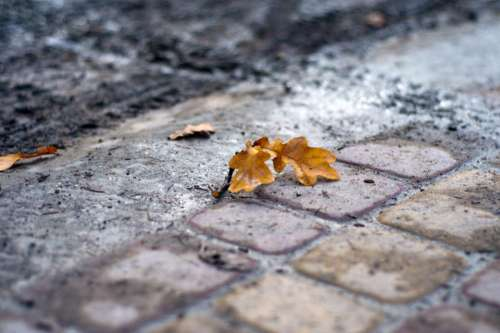 cobblestone ground leaves fall autumn