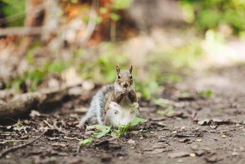 squirrel animals nature