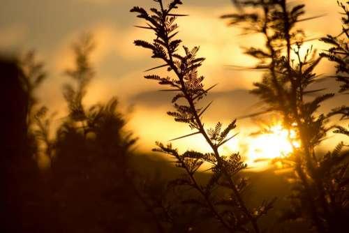 plants nature leaves ferns shadows