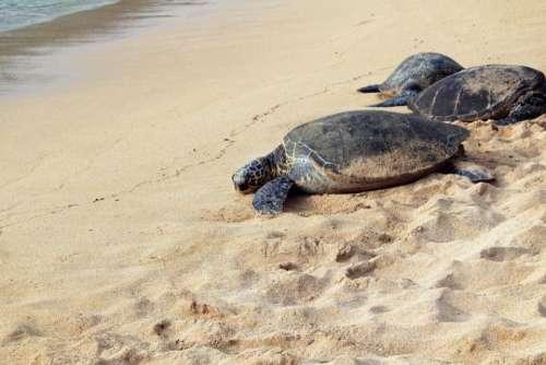 animals turtles tortoises amphibians hard
