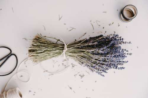 lavender herb bunch crafts sellotope