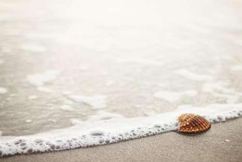 sea shell beach sand shore ocean