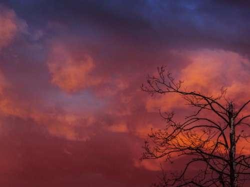 sky orange sunset dusk trees