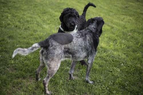 black puppy dogs pet friend