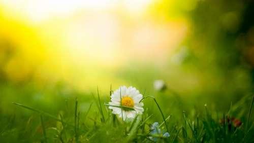 green grass field flower plant