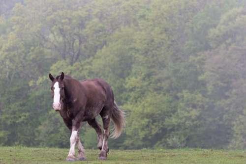 horse pasture equine peaceful grass