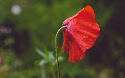 red petal flower nature plant