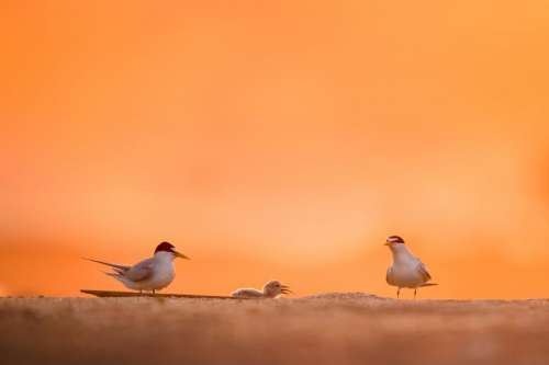birds animal orange sky sand