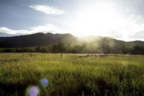 green grass rural countryside field