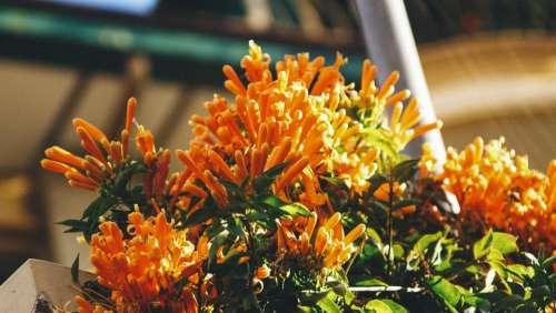 orange petal flower plant nature