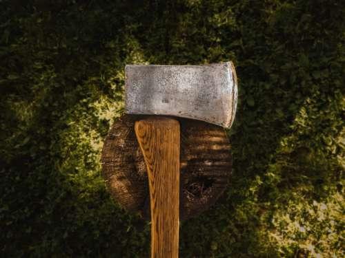 axe tree stump chop wood