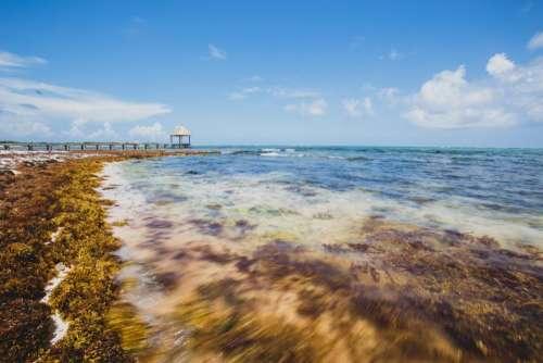 ocean sea coast seaweed pier
