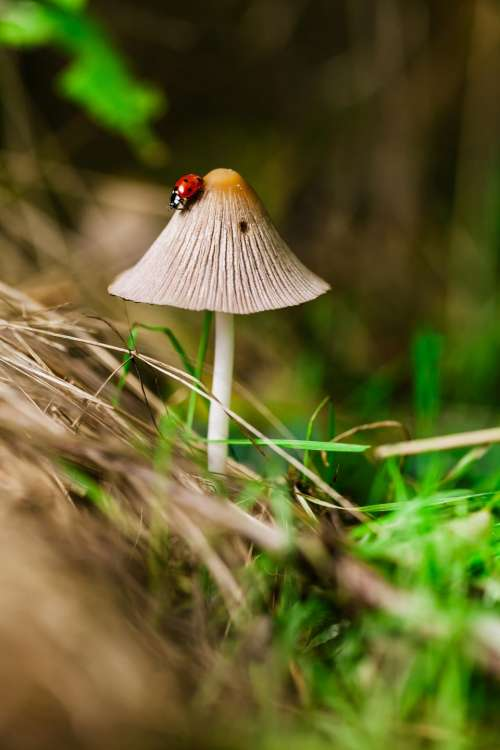 plants nature mushrooms grass insect