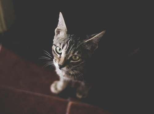 cat pet animal black floor