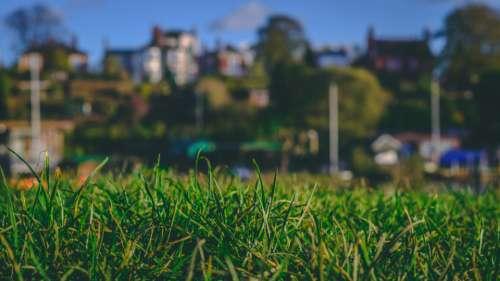 grass landscape closeup sky blue