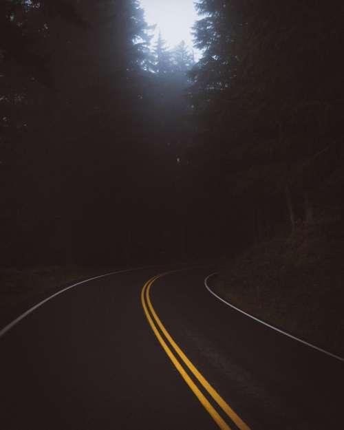 dark road travel trees plant